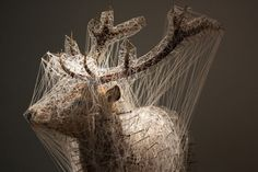 Stellar Animals: Taxidermy Covered in a Web of Stars