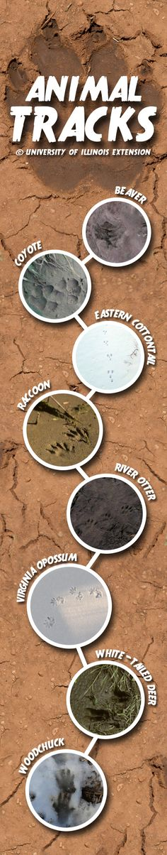 Tracks can help identify animals causing damage to property, or just for fun!