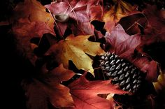 Steve Wood Photography  Nature photography fall leaf Autumn  Floor  Fine Art Photographic Print  (Light Painting Series) via Etsy