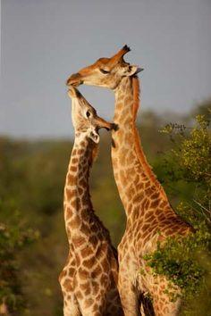 Rencontres amoureux animaux