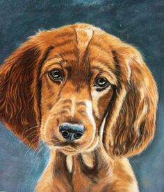 Spaniel by *Sarahharas07 on deviantART