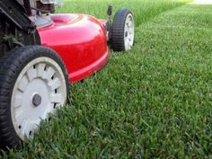 Spring Watering and Mowing Tips