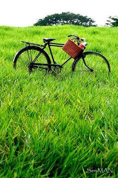 Bicycle field of dreams.....