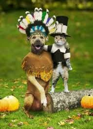 funny thanksgiving pictures - Google Search