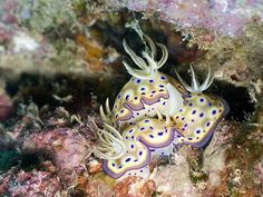 Nudibranch by Boogies with Fish, via Flickr