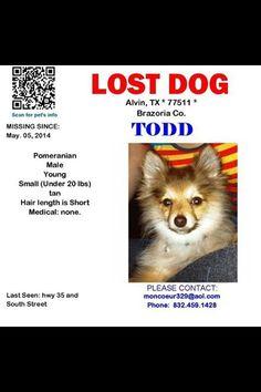 #lostdog #Alvin #TX male tan pomeranian. Still Missing!! Todd was last seen 5.5.14 in Alvin TX  #LDOT
