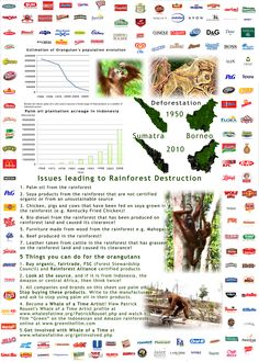 Brands that use palm oil