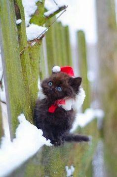 Santa...Kitty.