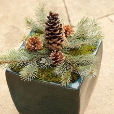 Make Your Own Woodsy Container outdoor decorations, clothes hangers, christmas, craft stores, planter, container flowers, branches, front porches, the holiday