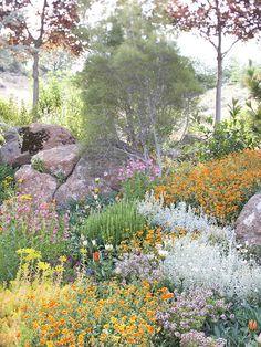 Drought-Tolerant Rock Garden