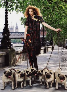 Pugs from British Marie Claire magazine