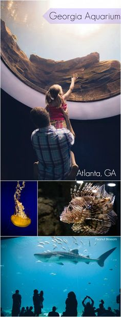 Georgia Aquarium: Our kids are big fish-lovers and aquarium vets. They were still blown away by our visit to this amazing attraction! Heading to Atlanta? Be sure to add this to your list.