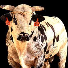 Bulls>>> Practically my life <3