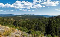 Carson National Forest. New Mexico.