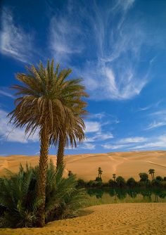 Palm trees at Umm al-Maa - Lake Ubari, Libya