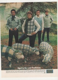 1970 Pendleton Sweaters and Dyed Sheep Advertisement 70s Mens Fashions I feel so sorry for the poor sheep!!