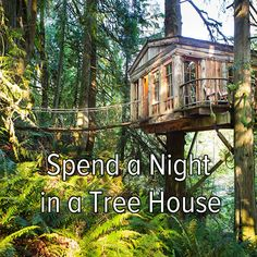 Before I die... Spend a night in a tree house.