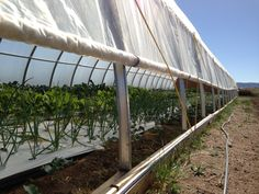 Business Planning for Small Hydroponic Farms: Business Overview (Part 1)