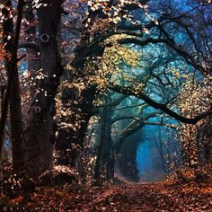 forests, tree, color, path, magical forest