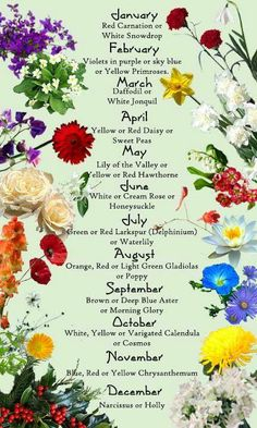 The October Flower #calendula