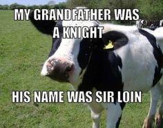 funny animals, animal humor, beef, funni, agriculture, joke, food humor, sir loin, knight
