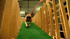 "Houston's ""Barkitecture"" challenges design teams to create artsy abodes for pups."