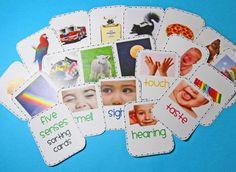 Five Senses Sort (free; from Kindergarten Kindergarten)