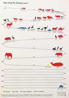 How long different animals live – from the pioneering infographics of ISOTYPE inventor Otto Neurath circa the 1930s