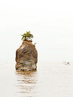 canada, solo tree, rocks, vancouv, siwash rock