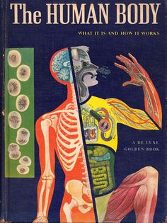 the Human Body 1959. i want this book. & i want these pictures in prints for an office :]