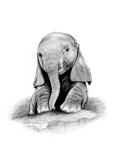 Baby Elephant Pencil Drawing Baby elephant pencil drawingPencil Drawings Of Baby Elephants