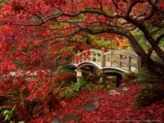 Japanese Garden, Royal Roads University, British Columbia. A bridge canopied by a tree.