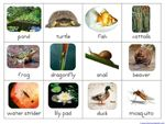 Rainforest animals - montessori at home