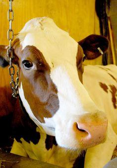 linda vaca