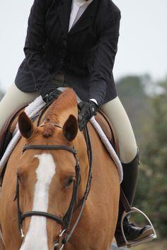 For the Love of Horseback Riding