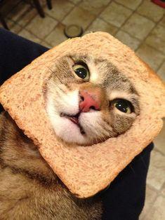 Breading cat.