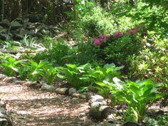 creating a woodland shade garden-slideshow 2.jpg
