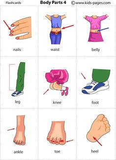 Free printable body parts flashcards
