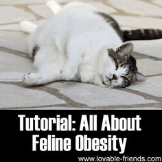 Tutorial - All About Feline Obesity