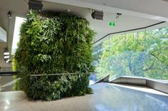 A living wall at the