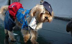 20 Adorable Photos of Pets in Halloween Costumes. #BudgetTravel #travel #Halloween #pets #costumes #cute #adorable #creative #petcostumes #FortGreene #Brooklyn #NewYorkCity #NYC #OnlyInNY  BudgetTravel.com