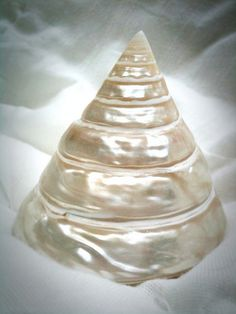 creamy pearl conical seashell