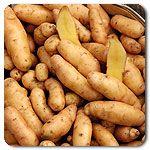 Organic Russian Banana Fingerling Potato
