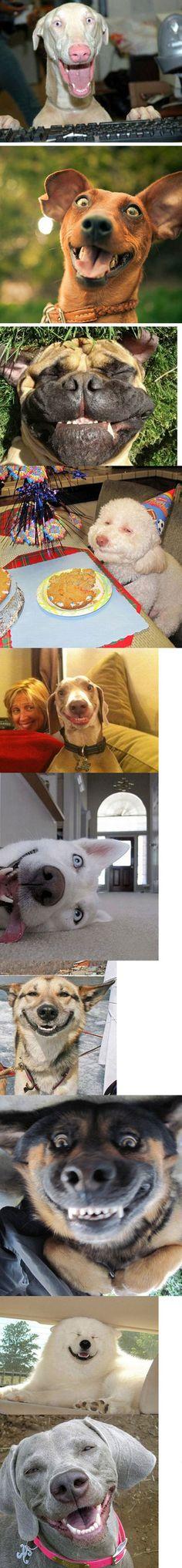 Overjoyed Dogs