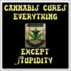 Unfortunately. These are some cool Funny #Marijuana Pins but #OMG check this out #Marijuana  www.budhubinc.com https://www.facebook.com/BudHubInc (Like OurPage)
