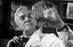 On this day in 1928, Scottish bacteriologist Alexander Fleming discovered the antibiotic penicillin. Fleming's discovery revolutionized medicine and has saved countless people from fatal infections. On a September morning in 1928, Alexander Fleming sat at his work bench at St. Mary's Hospital after having just returned from a vacation at The Dhoon (his country house) with his family. Before he had left on vacation, Fleming had piled a number of his Petri dishes to the side of the bench so that