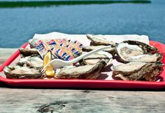 The freshwaters of the Apalachicola River mingle with the warm Gulf to produce some of the finest and plumpest oysters in the country.