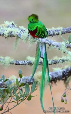 Quetzal! This is so beautiful, it just does not look real!