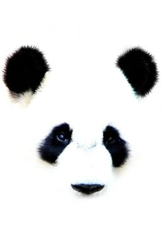 painted b & w panda