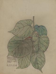 Charles Rennie Mackintosh - Beech Leaf, 1910